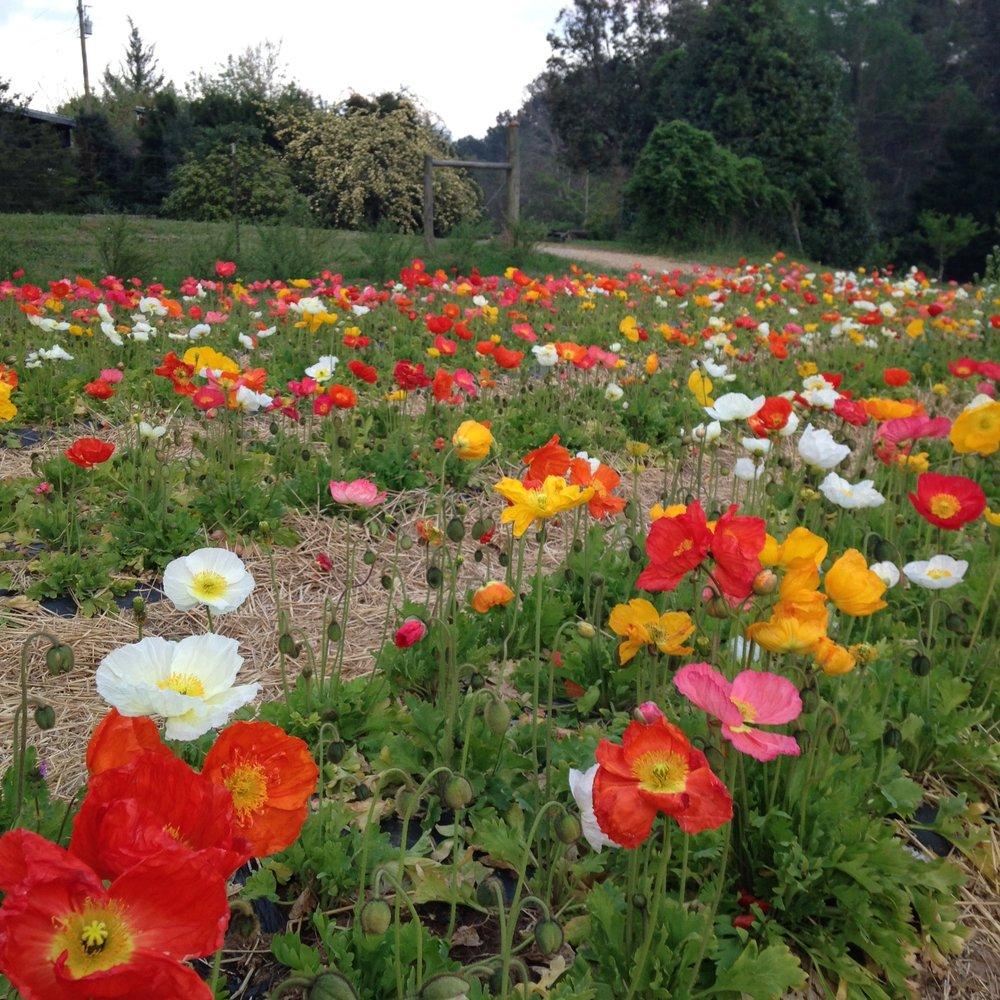 Organic-Flower-Farm-Athens-Ga-3PorchFarm.jpg