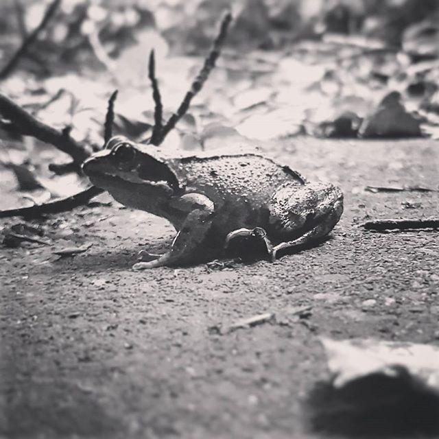 Found a fwog 😮 #frog #ribbit #ohlookafrog