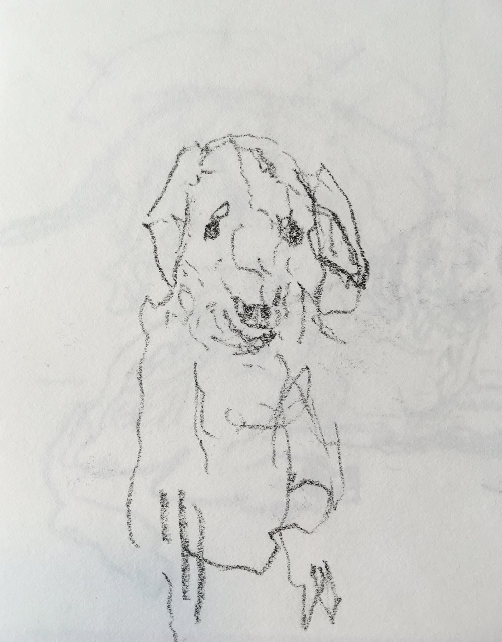 """Dog"" crayon on paper  2017  6""x6"""
