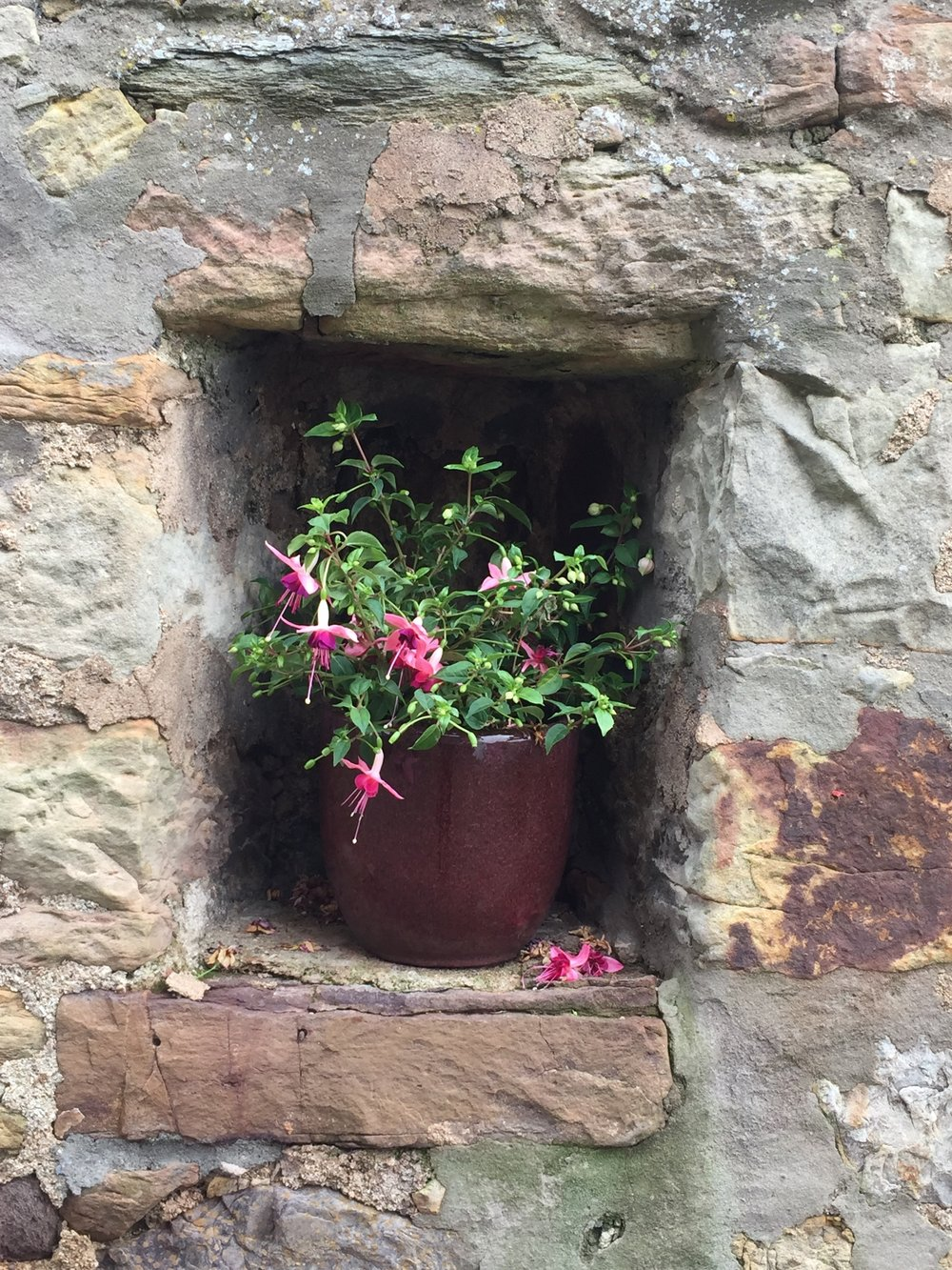 Scotland Window Box.JPG