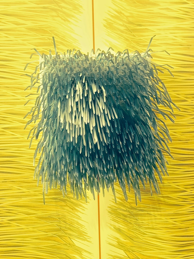 URCHIN : DYED ZIP TIES ON PRINTED WALL PAPER; Ealish WIlson