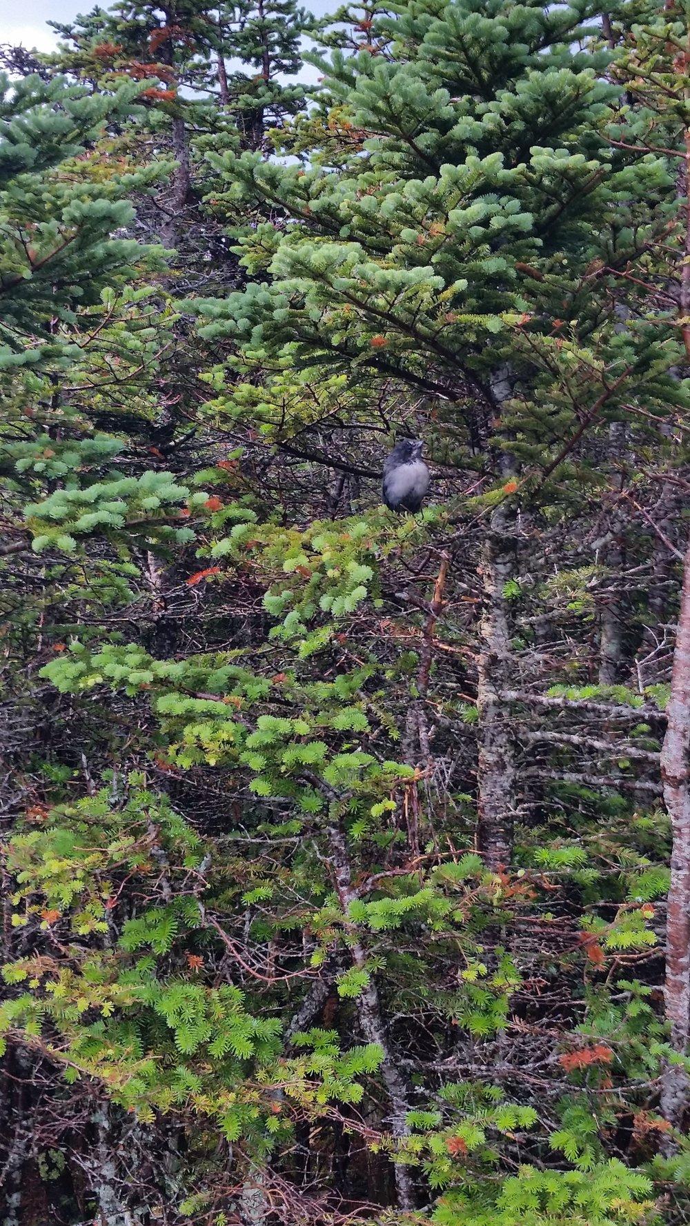 A friendly bird on the summit of Hancock