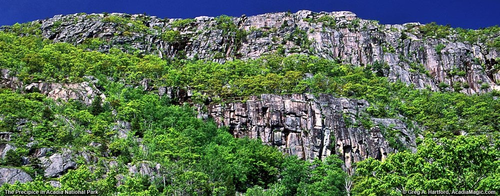 The Precipe Cliffs in Acadia where Peregrine's are nesting