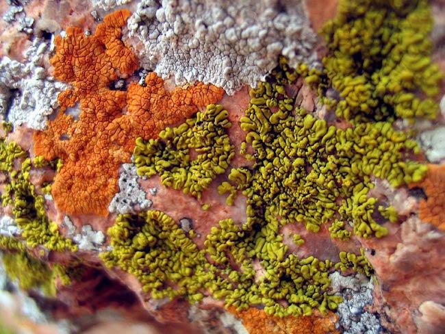 lichen-3.jpg