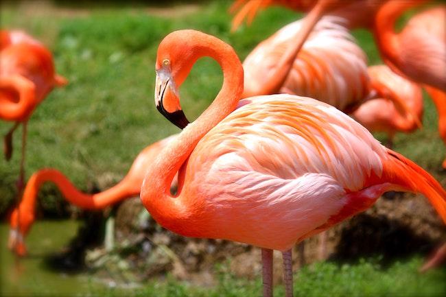 animal-birds-flamingos-36450.jpg