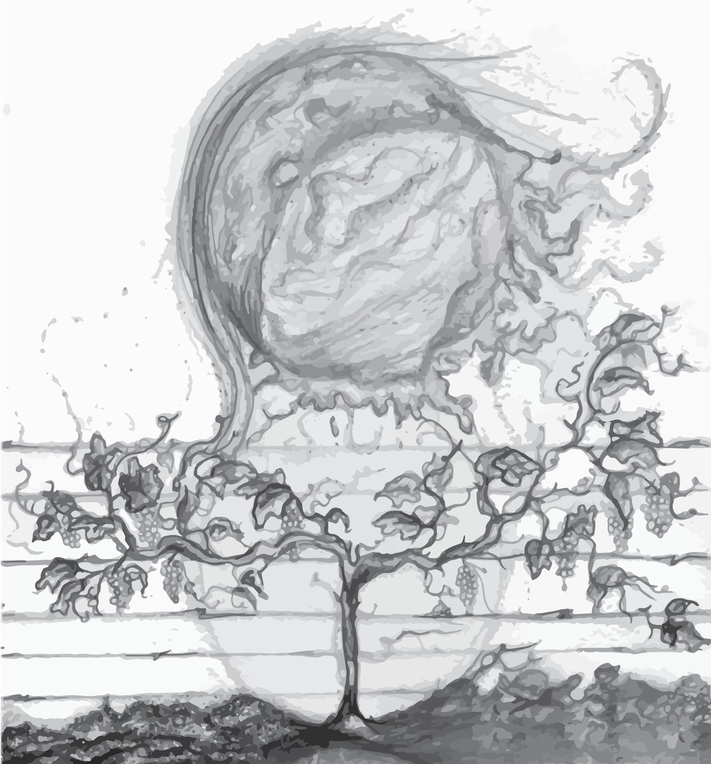 Sketch I did to describe the dynamics of a natural vineyard.