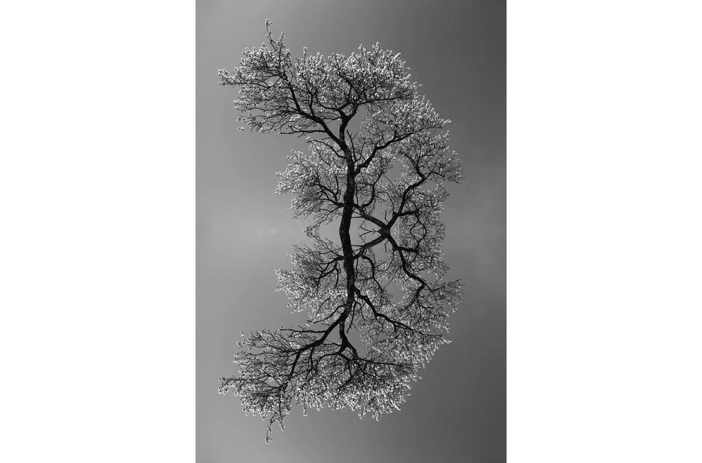 guiran_symetries_3.jpg