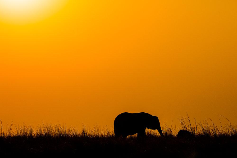 Tanning Elephant