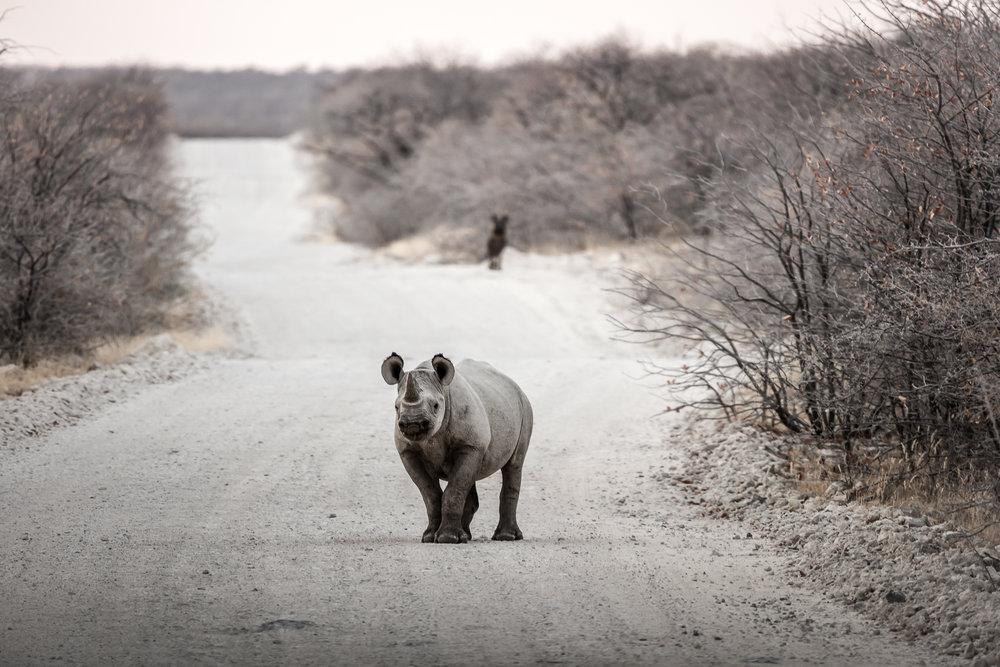 Sneaky Rhino
