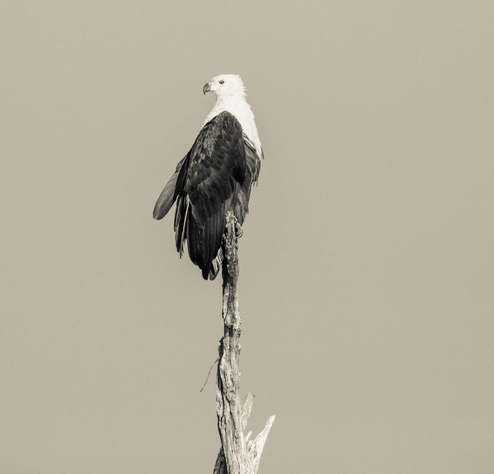 Modeling Eagle