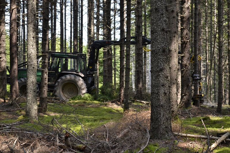 Silviculture and Harvesting