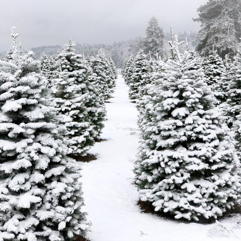 Snowy 2.JPG
