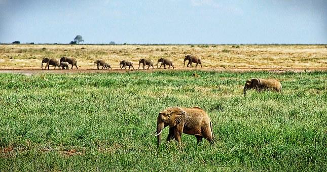 elephant-1065635__340.jpg