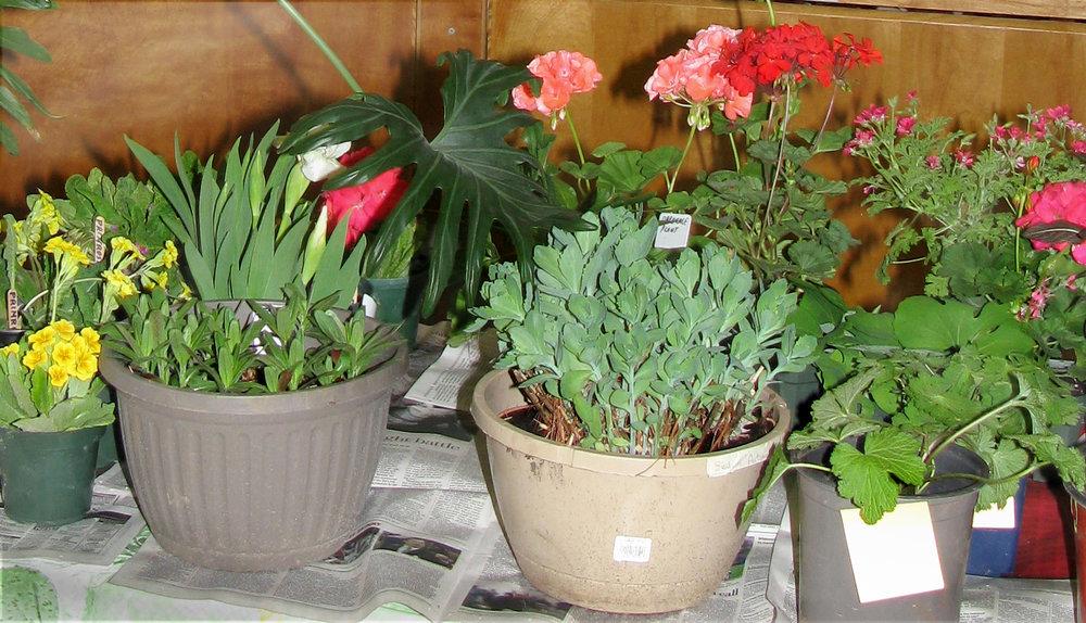Show Plant Sale .JPG