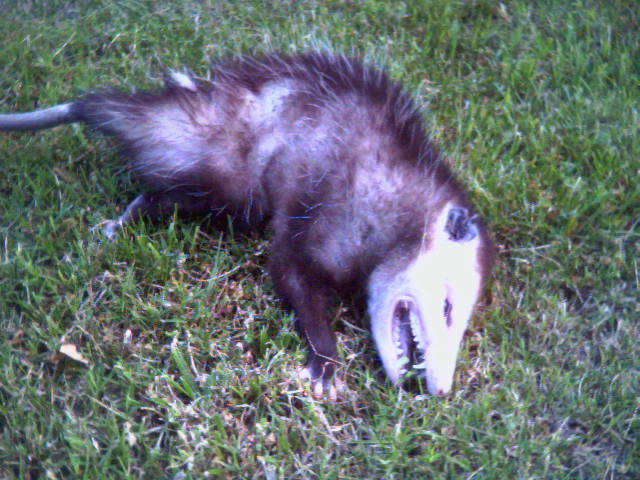 This is what my brother, Tucker, likes to bring to my mom. Sometimes it's a crow, or a rabbit, or a dead cat.
