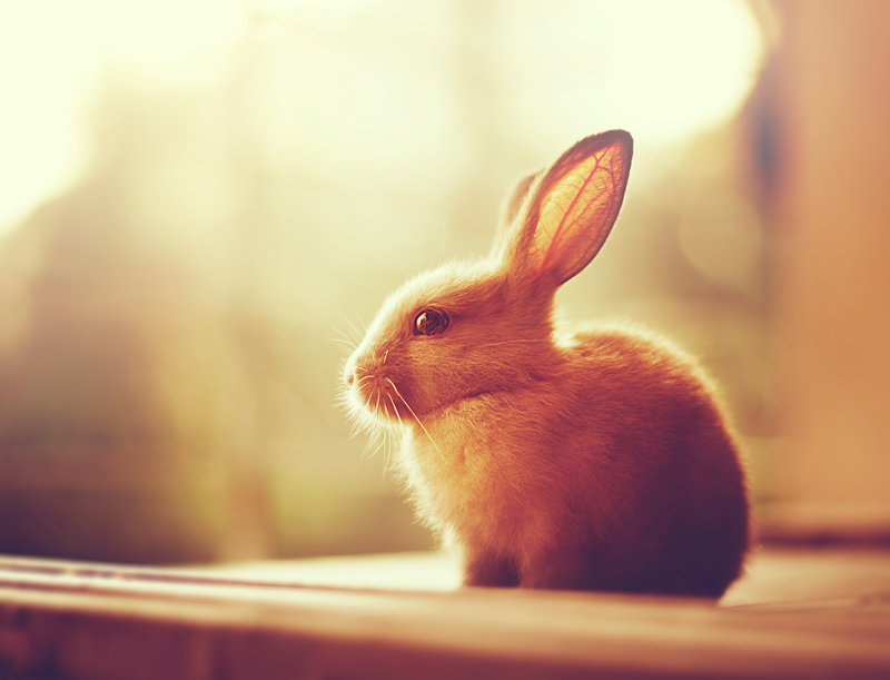 autumn_bunny_by_arefin03-d85ds55.jpg