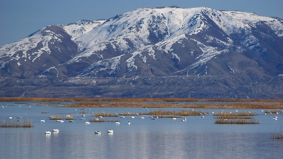 Bear River Bird Refuge.jpg