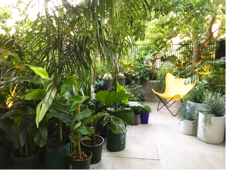 Our courtyard at home often resembles a Nursery when collecting plants for our installs.jpg