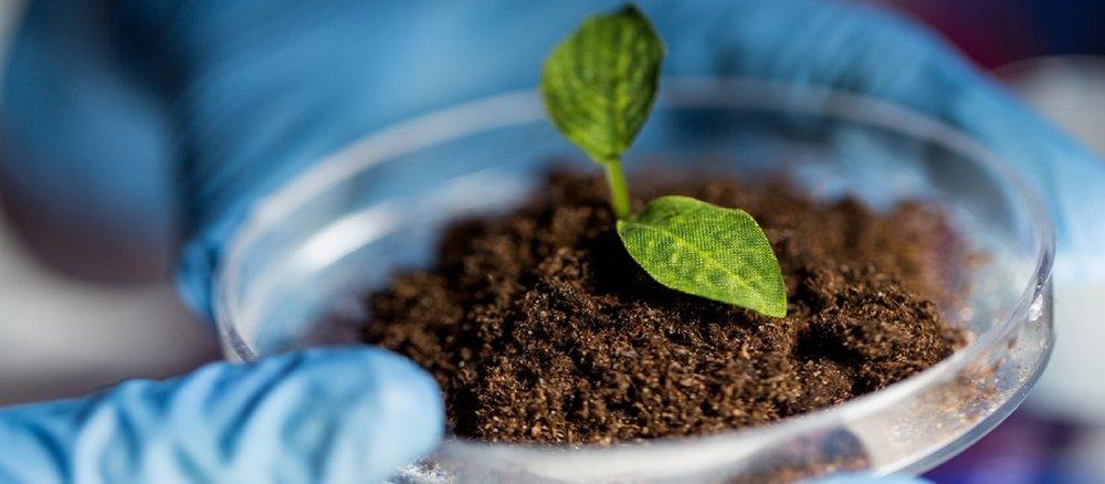 Biology-Plant-in-Soil-Sized.jpg