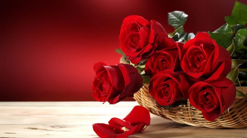 Love & Romance -
