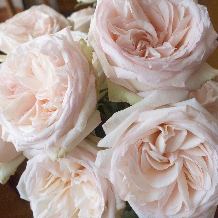 Blush Garden Roses. White Ohara