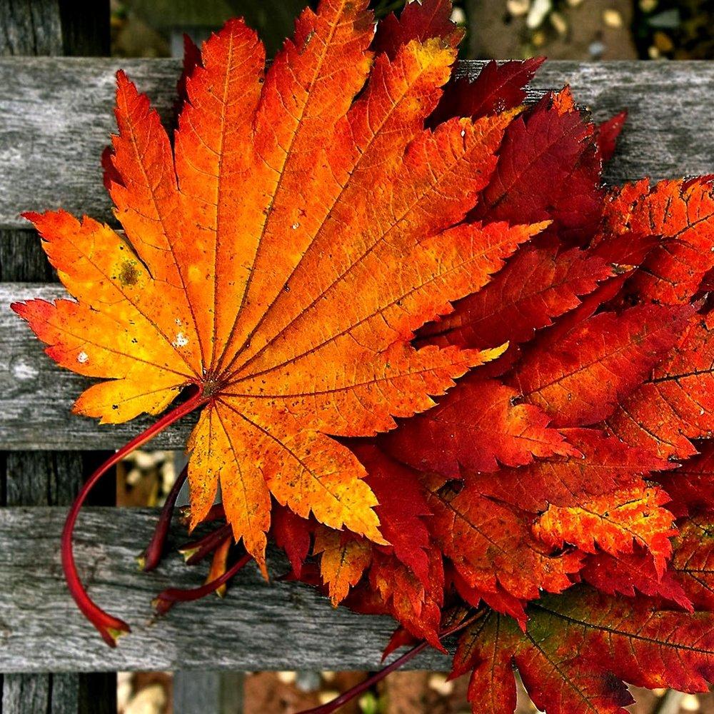 Fall Flowers -
