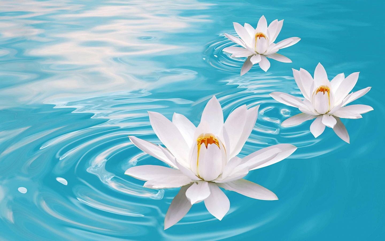 Get Well The Flower Petal