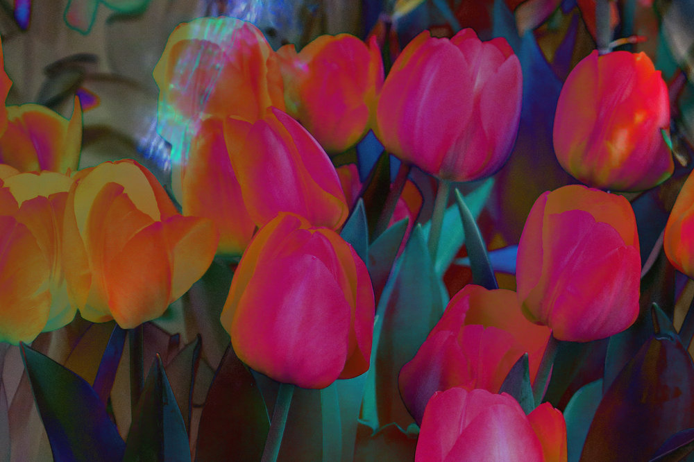 painted tulips difference.jpg