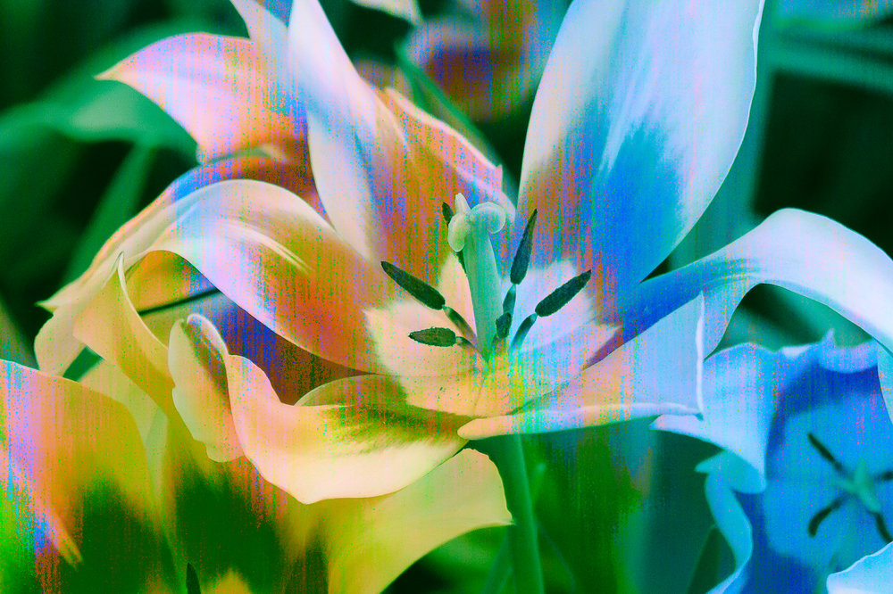 lilyblend-3.jpg
