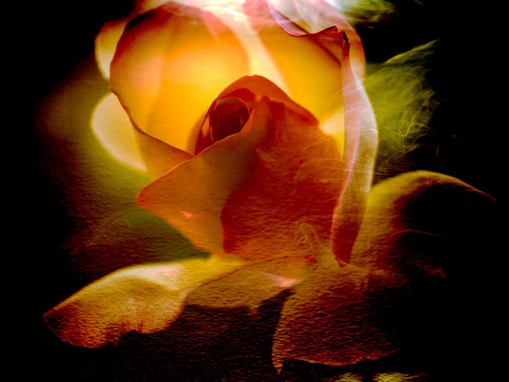 Rosesmoke1-14.jpg