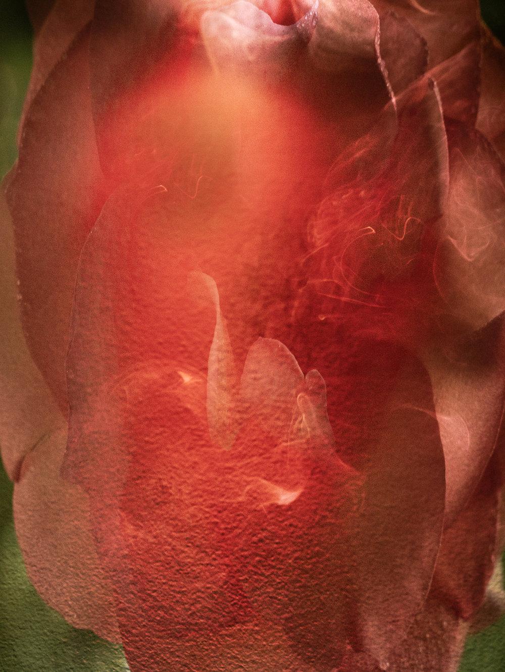 Rosesmoke2-15.jpg