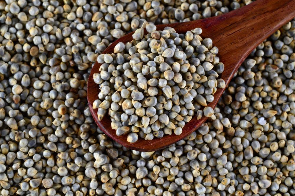 Bajra- Pearl Millet