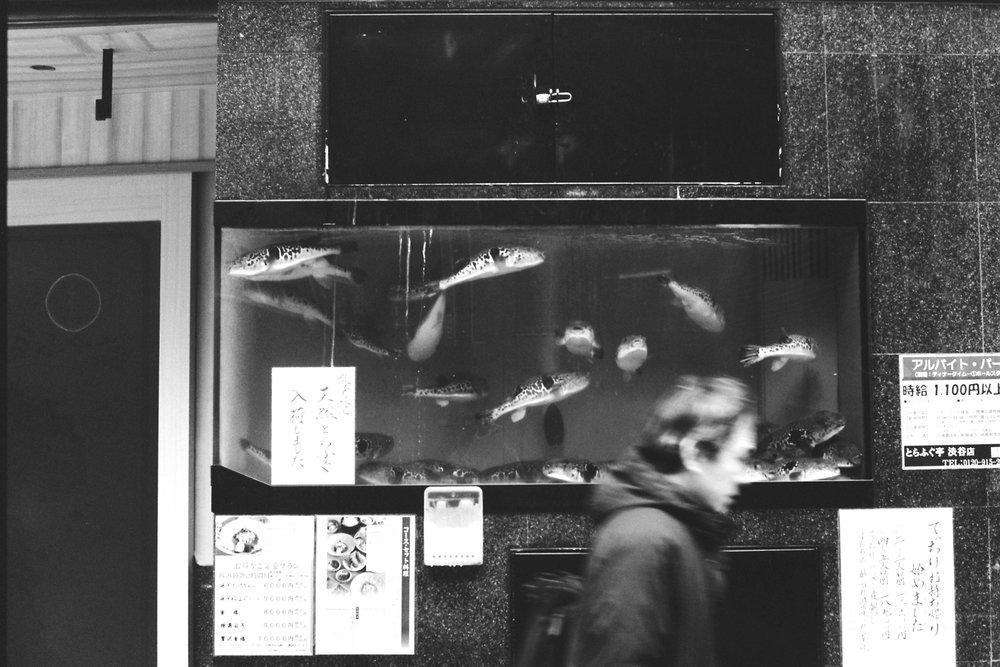 DANIELLA_BENEDETTI_TOKYO_HOTEL_WEEKEND6.JPG