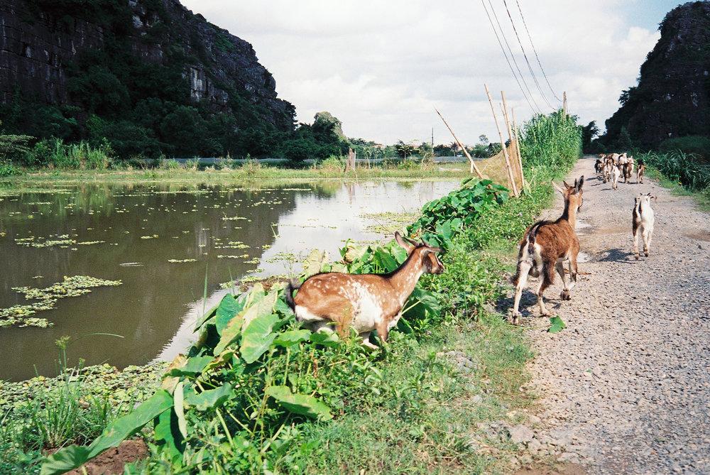 Vietnam-Hotel-W-Seq04.jpg