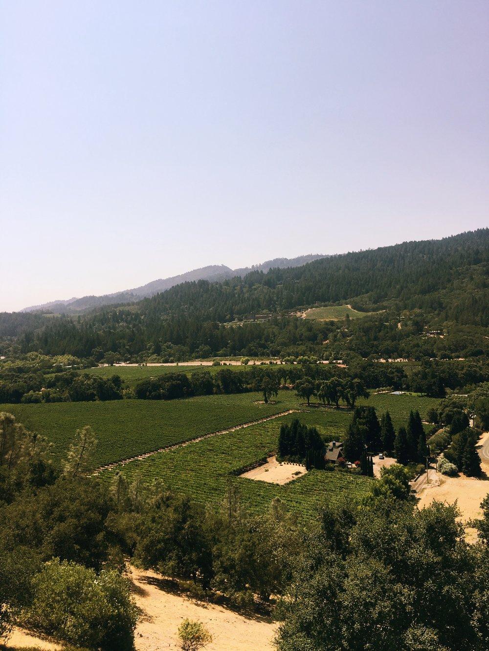 Napa Valley 3.JPG
