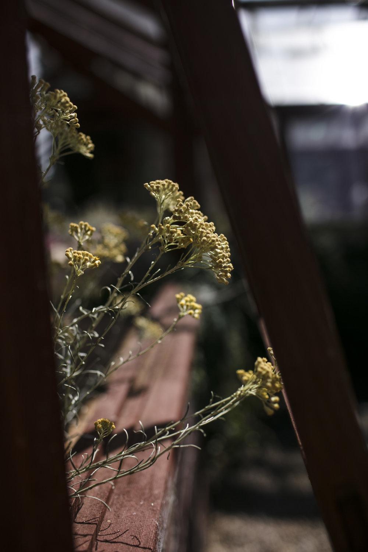 Jordan_Bunker_botanical_gardens_10.jpg