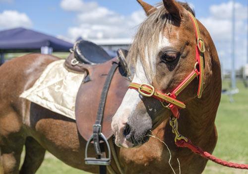activity-pony-rides-2.jpg
