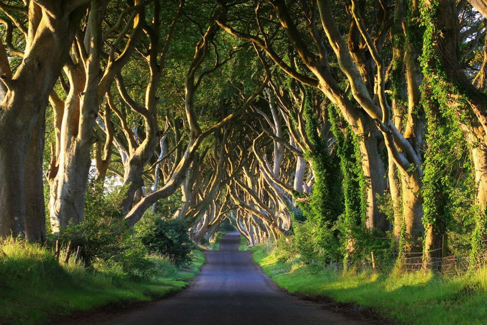Dark Hedges, Co. Antrim
