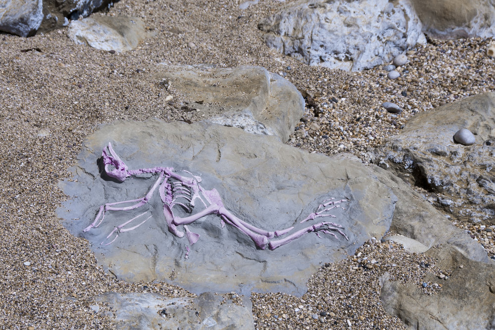 Pink Chicken Fossil Scunthorpe Poultry Processing Site, UK c 80-83 million years in future