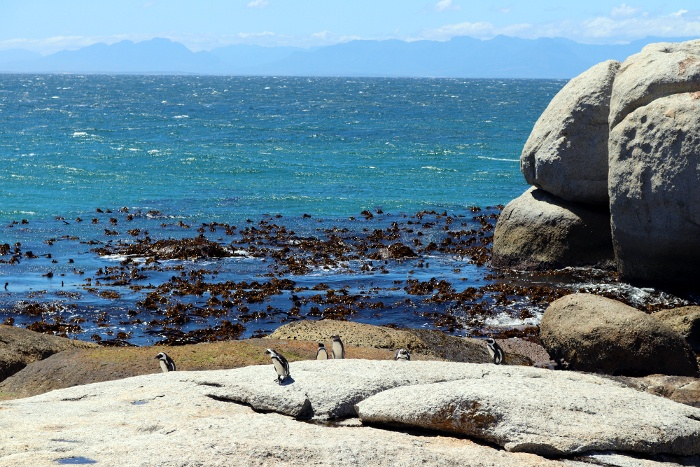 Boulder's Beach Penguin Path (Simon's Town) (19).JPG