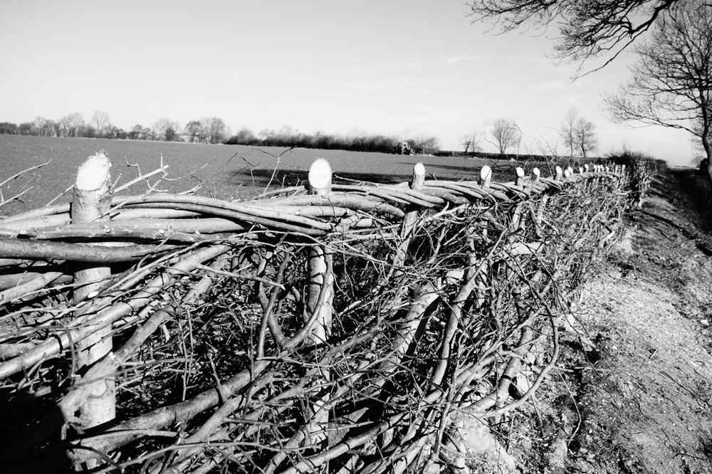 Hedgelaying & Planting