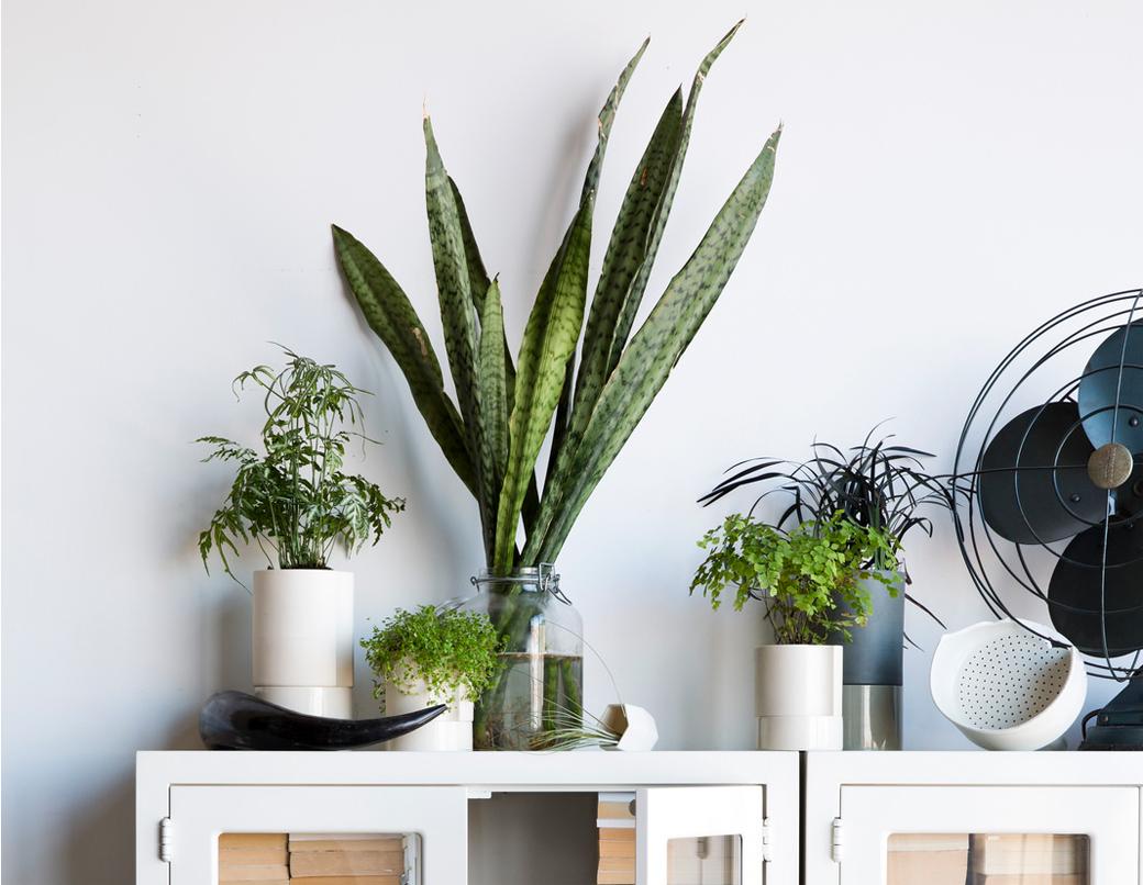 leader_plants