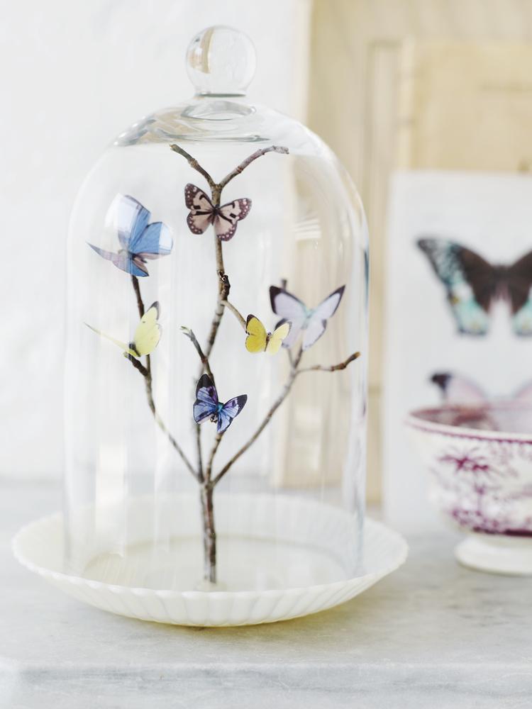 018_Butterflies059