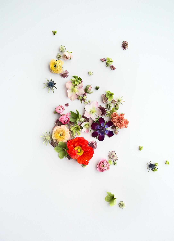Flower$3s_zoom