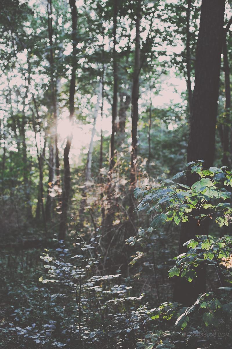 autumndecor8_hollybecker1