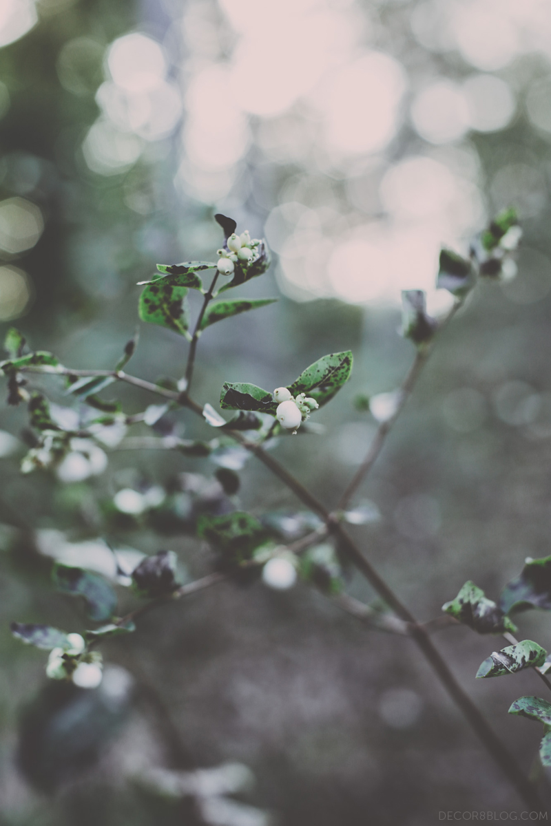 autumndecor8_hollybecker3