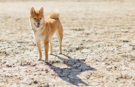 dogMIY