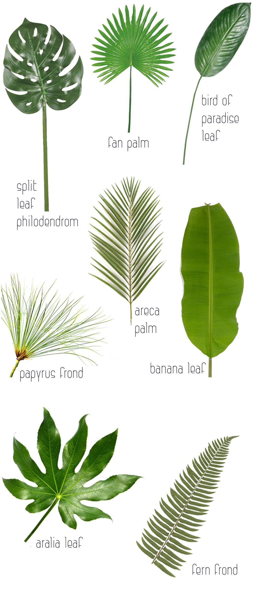 leaftrendchart4
