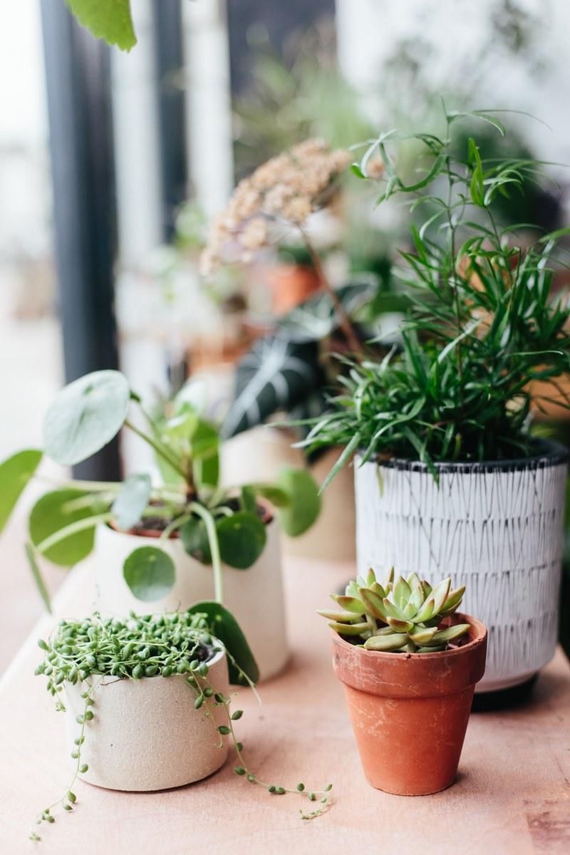 Botany2.jpg