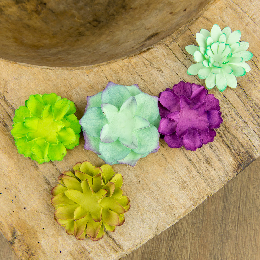Seed Paper Flowers Succulent Naturally Curated